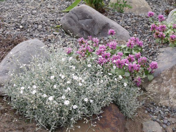 Alaska Hardy Plant Catalog