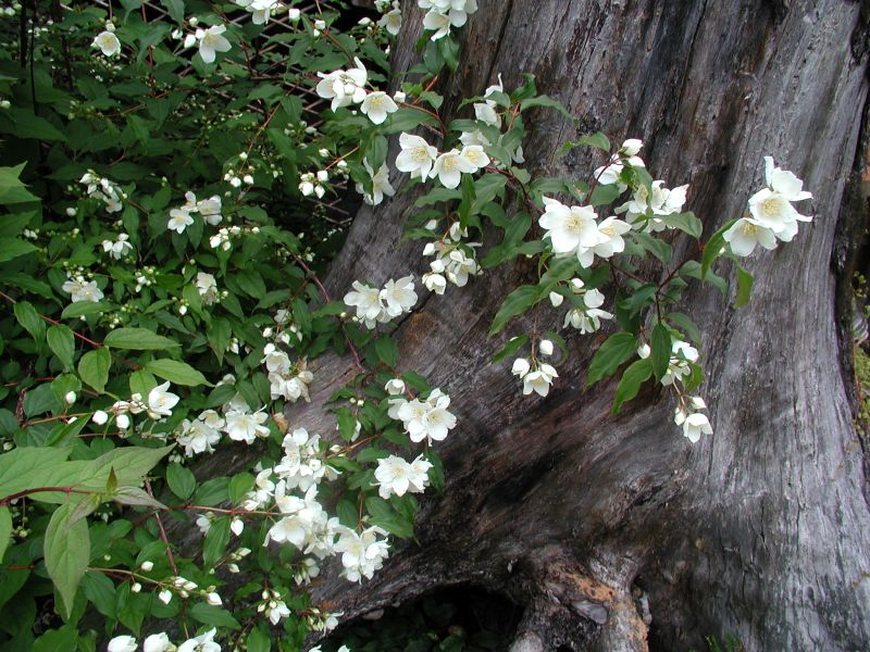 Alaska Hardy Trees And Shrubs