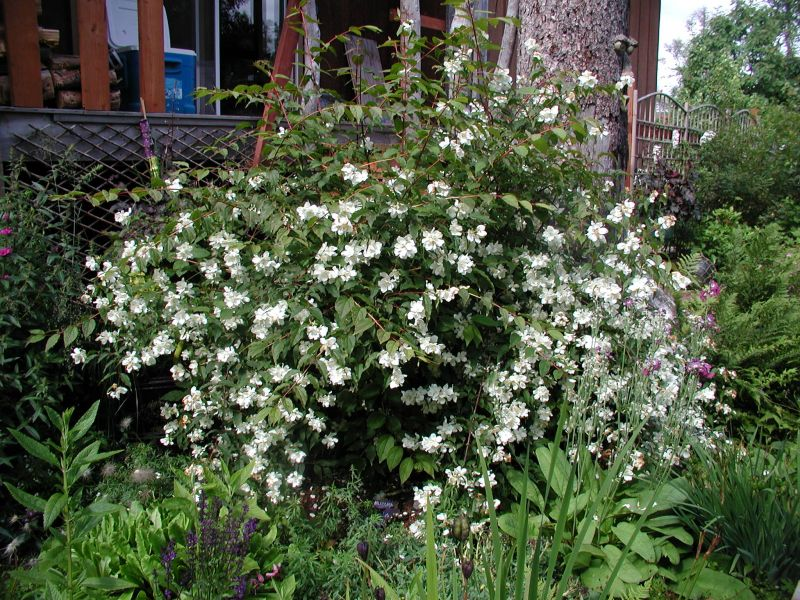 Alaska hardy trees and shrubs trees and shrubs mightylinksfo
