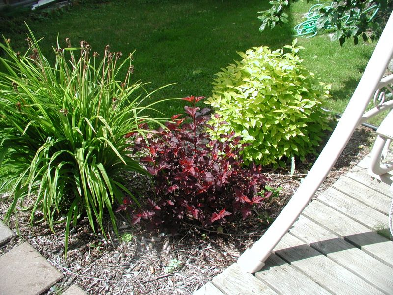 Photos Photo 1 Photo 2 & Alaska Hardy® | Trees and Shrubs azcodes.com